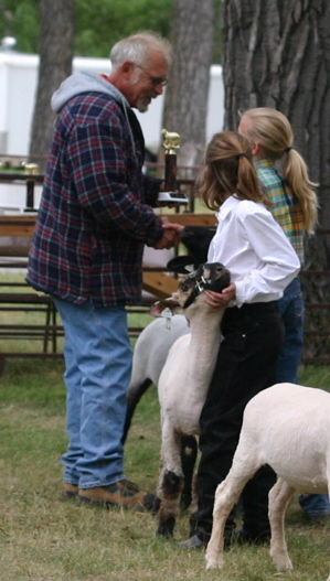 Horse Lover watches as another 4-Her wins overall champion black-face lamb. Patrick was the champion feeder black-face lamb.