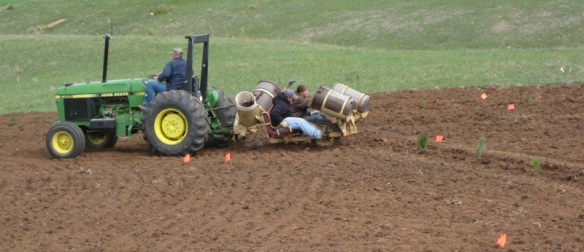 Conservation staff plants our trees while riding behind the small tractor.