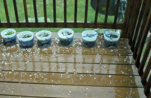 "We were pelted by hail up to 1"" in diameter. Here is some of the hail sprinkled around our deck."