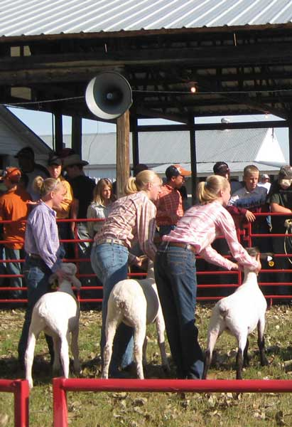 Sports Girl (far right) shows one of her black-faced lambs at our county fair in August 2009. I believe all of our sheep earned purple ribbons, although none were top finishers in their classes. Oh well ... there's always next year!